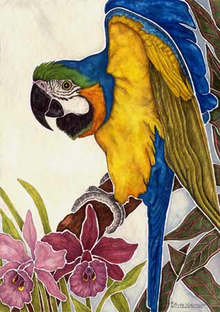 A blue and gold macaw giclée print from a watercolor painted by avian artist J. Price Wiesman, ©2003.